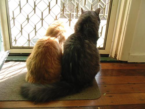 お勝手口の網戸越しに外を見る2匹