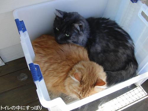 ベランダに置いた猫トイレの中にすっぽり入った2匹