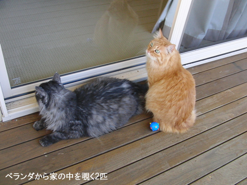 ベランダから家の中を覗く2匹