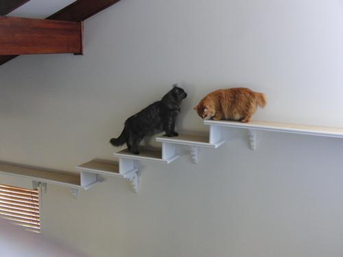 キャットウォークと階段を歩くモコにゃんとみったん