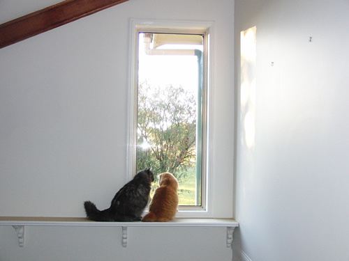 キャットウォークから外を眺めるモコにゃんとみったん