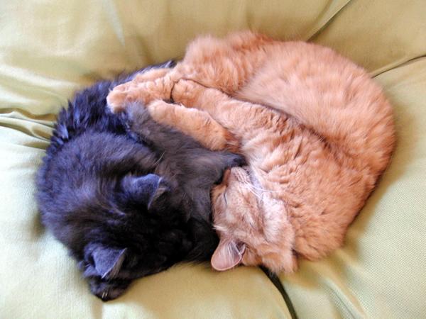 大きなクッションで仲良く昼寝をするモコにゃんとみったん