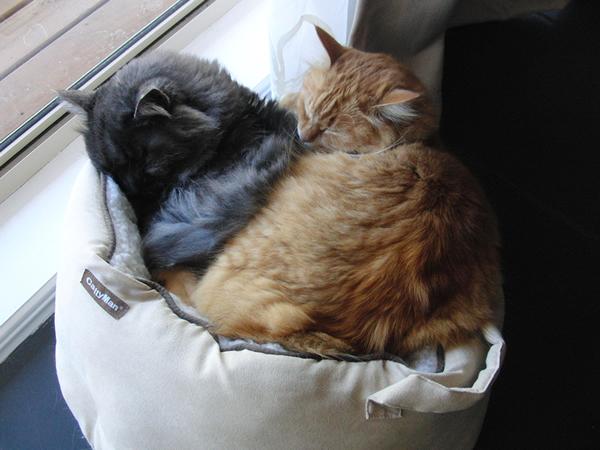 猫ベッドで2匹いっしょ