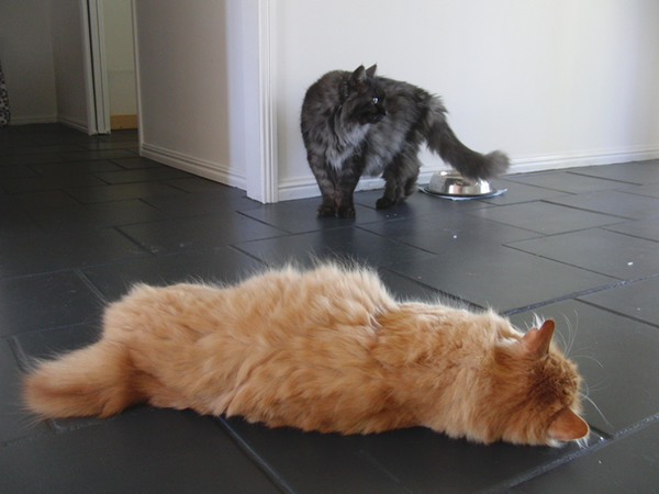 いつも床の上でごろごろするみったん