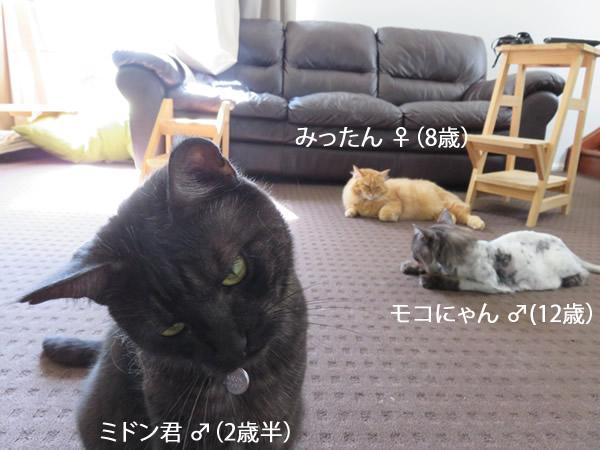 我家の3匹(モコにゃん、みったん、ミドン君)
