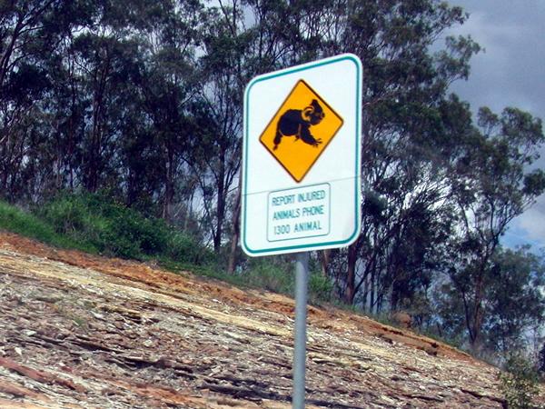 コアラの道路標識