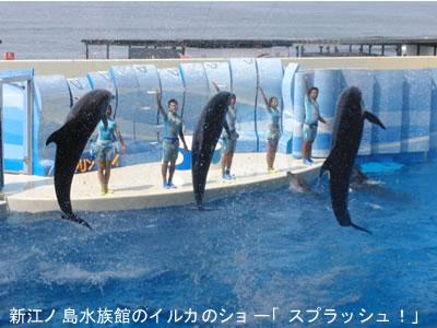 新江ノ島水族館のイルカのショー「スプラッシュ!」