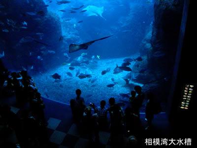 新江ノ島水族館で一番大きな水槽「相模湾大水槽」