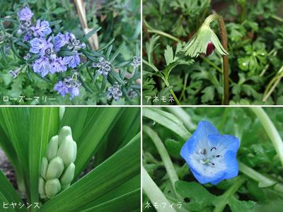 庭の主役になりそうな花たち