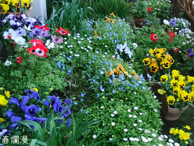春爛漫の庭