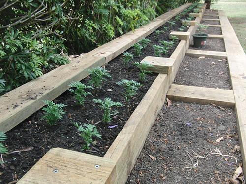 苗を半分だけ植えたガーデンベッド