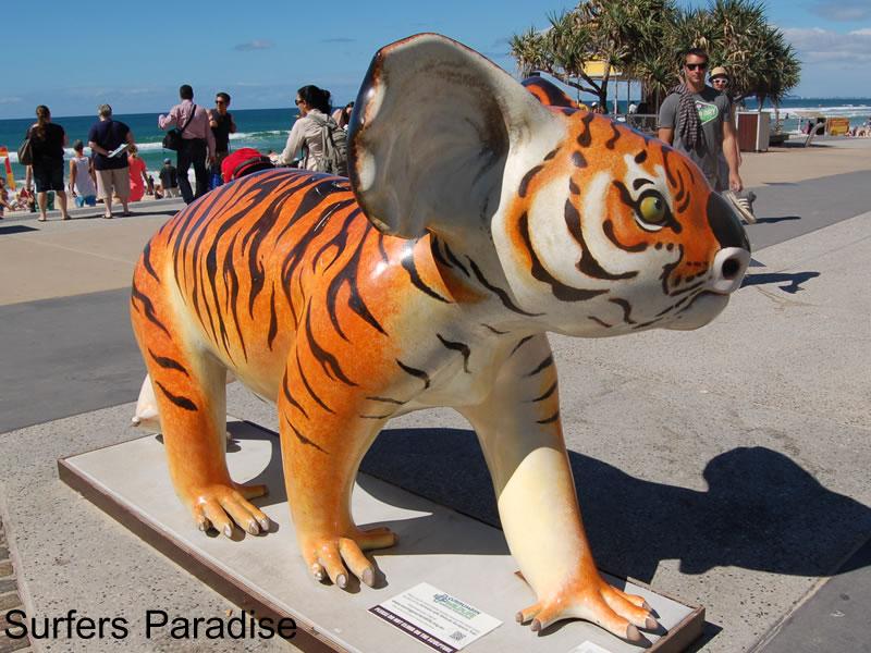 トラ模様のコアラ