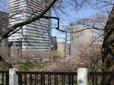 皇居北の丸公園の田安門の近くの桜