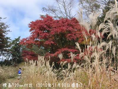 標高720メートル付近、紅葉はきれいに紅葉してました