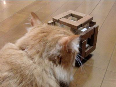 猫塔職人のパズル「Heavy Headed Burr」の臭いをかぐみったん