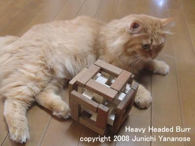 Heavy Headed Burr copyright 2008 Junichi Yananose