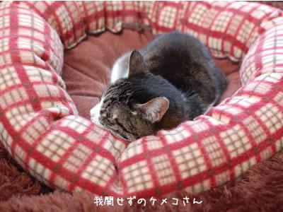 我関せずのケメコ、ゆったりと猫ベッドで熟睡中