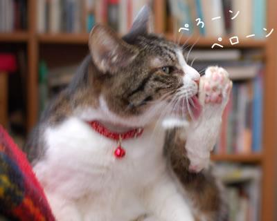 足をペロペロ舐めるケメコ