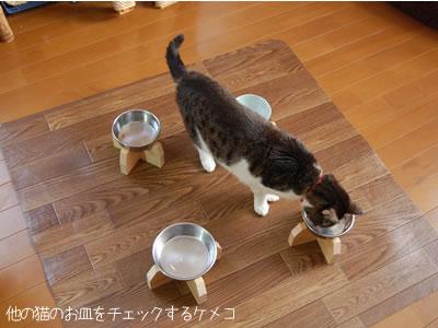 食べ終わった後も他のお皿を覗くケメコ