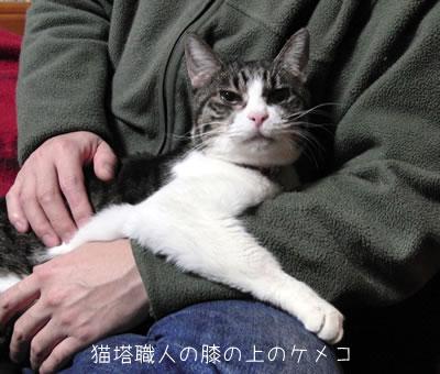 猫塔職人の膝の上のケメコ