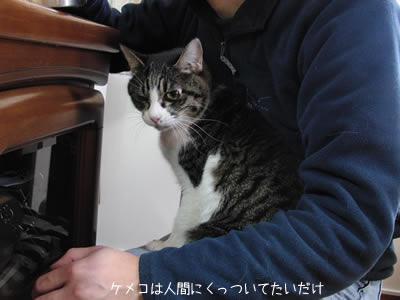 ケメコは猫塔職人にくっついているのが目的で魚は二の次
