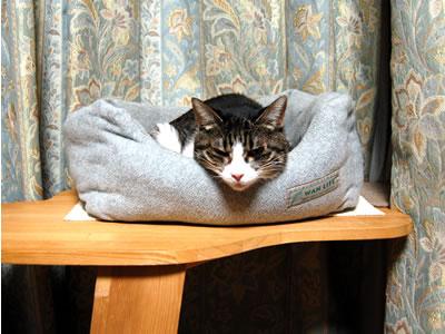 猫ベッドの中のケメコ