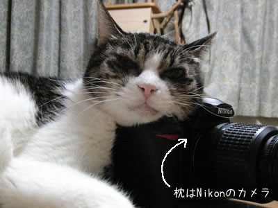 ケメコが枕の代わりに使っているのはニコンのカメラ