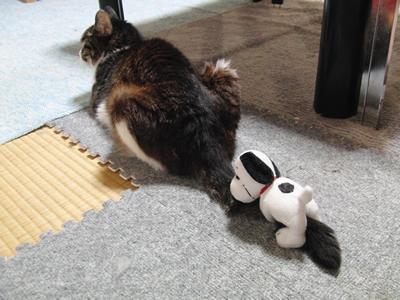 尻尾に人形がついてても、まったく気にしないケメコさん