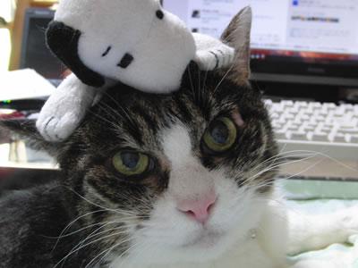 頭の上にスヌーピーの人形、それでもやっぱり気にしない