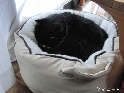 久しぶりに猫ベッドに入ったクマにゃん