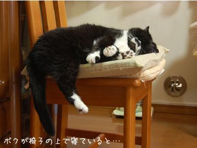 水槽の前の椅子で寝るクマにゃん