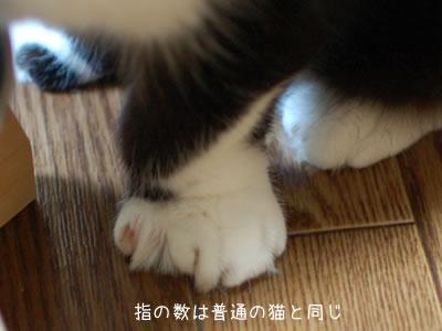 大きなクマにゃんの足