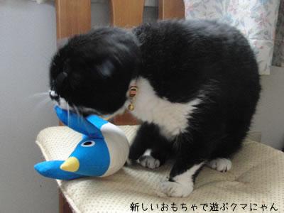 新しいペンギンのおもちゃで遊ぶクマにゃん