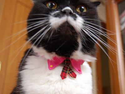 ほらね、ネクタイだよ