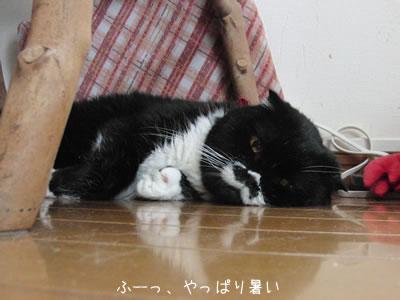 暑くて我慢できなくなるとベッドから出て床につっぷすクマにゃん