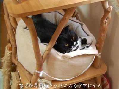 暑い中、温かい猫ベッドに入っているクマにゃん