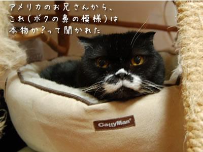 アメリカのお兄さんからのご質問「その鼻のちょび髭模様は本物か?」