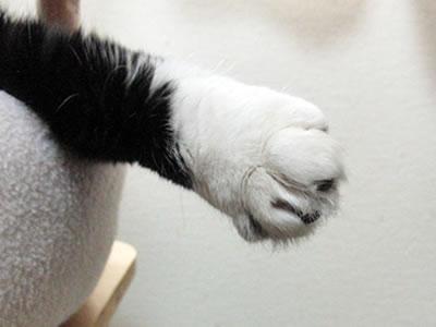 クマにゃんの後ろ足