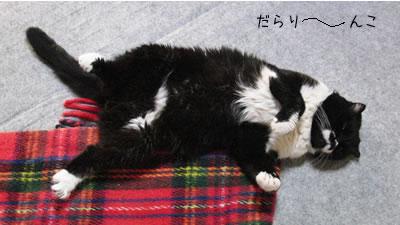 床に寝そべるクマにゃん、だらりーーーんこ