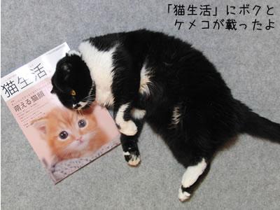雑誌「猫生活」とクマにゃん、5月号にクマにゃんとケメコの写真が掲載されました