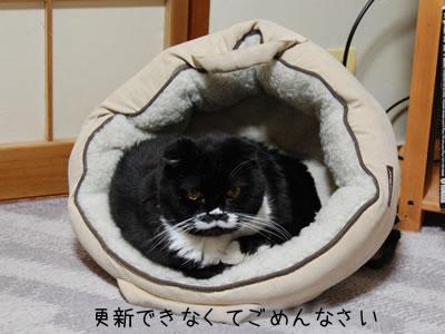 猫ベッドの中のクマにゃん、休憩は大事だよ