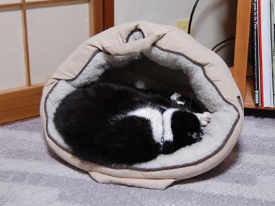 ちょーっとだけ猫ベッドが傾いてるだけさ
