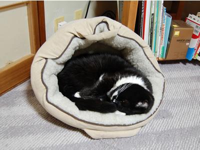 猫ベッドが傾くから、ボクも姿勢も傾いちゃうんだな