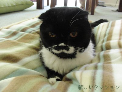 新しい猫用クッション