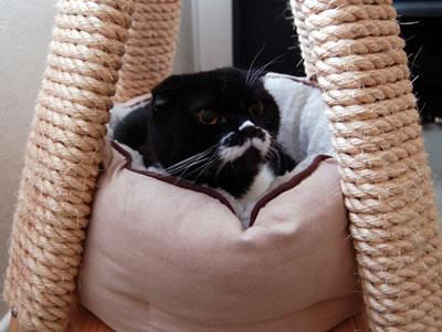 最近すっかり寒くなり、猫ベッドの使用頻度がいっきにアップ