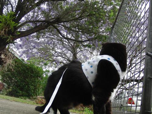 この写真じゃわかりにくいけど、枝の上からボクに向かってピーピー文句を言ってる