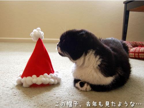 サンタさんの帽子とクマにゃん