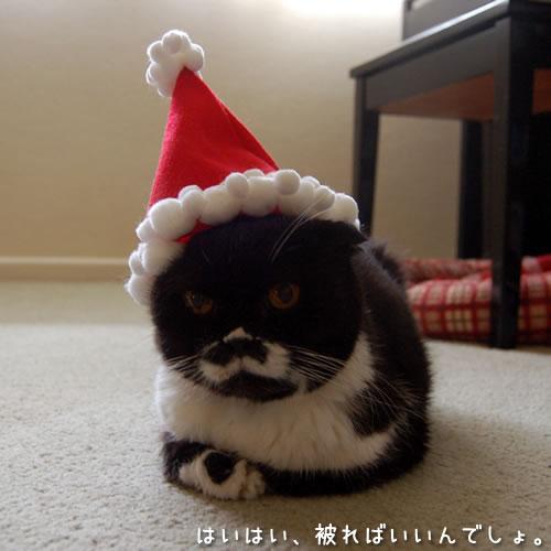 サンタさんの帽子を被ったクマにゃん