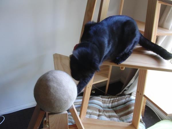 気になる物は何でも猫パンチ