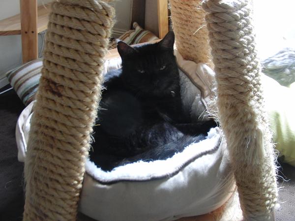 爪研ぎの中にある猫ベッドに入ったミドン君